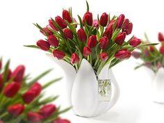 Tulpen In De Winter