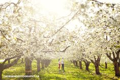 orchard engagement shoot ~ adrian photography