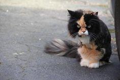 don swipe.  Freakishly Cute Animals, Who Definitely Want To Kill You 22