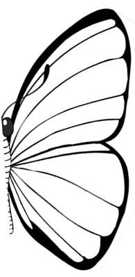 Butterfly symmetry - A simple worksheet where children match the correct symmetrical image to each butterfly.