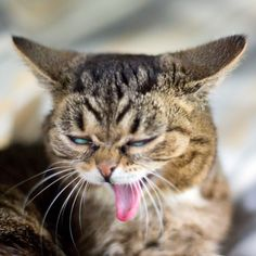 It turns out BUB does momentary impressions of screaming eagles when she yawns. Good Job BUB.
