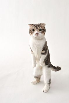 """* * What kind place iz dis? No litter box facilities? I gotta go! Better ask to beez let outside. Degrading tho, like a dog."""""""