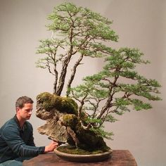 Penjing by Ryan Neil, with 2 juniper trees on a rock formation