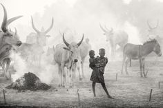 Dinka cattle camp - The smoke, fires and dust create a scene which is almost biblical. The symbiotic bond between the Dinka and their cattle is a scene to behold. They massage their Ankole Watusi cattle with ash and do it with care and affection.