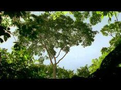 David Attenborough: Amber Time Machine (BBC)