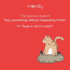 """And he's perfectly happy with it because cats are the best! 🐈😻 Original idiom: """"Die Katze im Sack kaufen"""""""