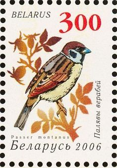 Stamp: Eurasian Tree Sparrow (Passer montanus) (Belarus) (Ninth Definitive issue. Garden birds) Mi:BY 628v,Sn:BY 589,Yt:BY 559,BLR:BY 646