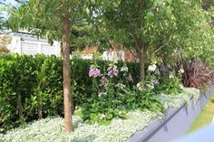 The Gardener's Library - Aspiration: Informal planting. Melbourne International Garden Show 2014 Gold medal. Photo by Janna Schreier