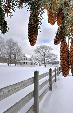 On The Farm At Winter Time