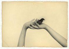 La bohème, mon amour: La délicatesse des plumes