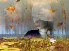 "Saatchi Art Artist André Pillay; Photography, ""Pond Lily"" #art #saatchiart"
