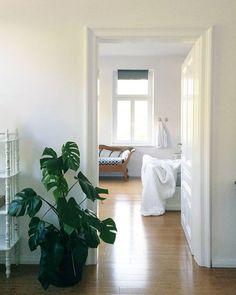 #altbauwohnung #sommersonnenlicht #zuhause #knarzendetüren #schiefewände #whitedoors whiteinterior #interiorinspiration #interior #monstera #ikea #bedroom #livingroom #chaiselongue #instahome #instainterior #homesofinstagram whitebedroom #solebich #whiteandwood