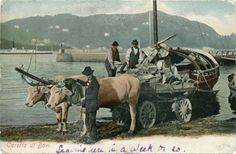 Oxen's wagon