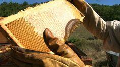 Epicerie fine - Le miel de Provence Dans les Alpes de haute Provence, le plateau de Valensole. Il accueille chaque été des apiculteurs comme Jean-Philippe Mandard qui viennent installer leurs ruches pendant la floraison de la lavande. Le miel de Lavande est le miel provençal par excellence. Mais de nombreuses autres variétés ou crus de miels sont récoltés dans la région du printemps à l'automne. Guy Martin, Provence France, French Food, South Of France, France Travel, Survival, Philippe, Comme, Brave