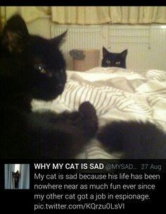Why my cat is sad