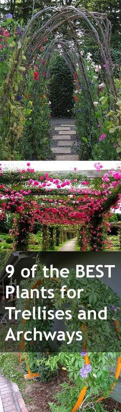 9 of the Best Plants for Trellises, Archways and Arbors. These beautiful plants are perfect climbers for your landscape....