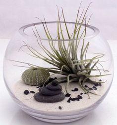 Desktop Zen garden - cute!
