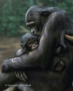 Cincinnati Zoo.  Too adorable.