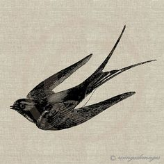 Flying Swallow Instant Download Digital Image No.57 Iron-On Transfer to Fabric (burlap, linen) Paper Prints (cards, tags)