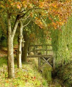 PHOTO OF THE DAY  My favorite tree is the Willow tree.  Isn't this piece of land perfect!  View Postshared via WordPress.com