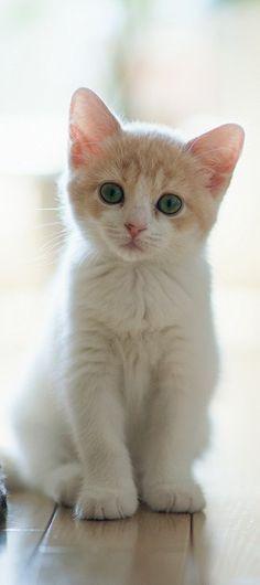 Just a beautiful kitten!