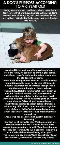 This made me cry... if you've ever had a dog that you've had to put down, you'd understand with your heart, not just your brain.