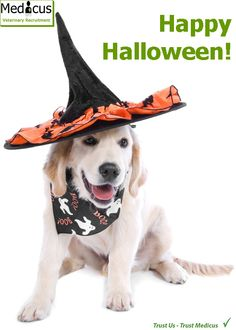 We take the scary out of recruitment!  Contact us on 01926 356356 between 8am and 8pm. #happyjobs #happyhalloween