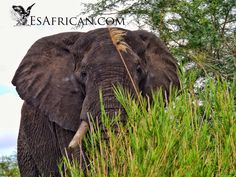 Our boat came quite close to this elephant on the bank.