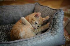 Photos, Cats, Poster, Animals, Gatos, Animales, Kitty Cats, Animaux, Animal Memes
