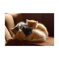 ▲ ❤ liked on Polyvore featuring animals, pictures, backgrounds, photos and cats