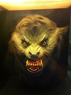 Werewolf from American Werewolf in London by Rick Baker as it sits in the home of Rick Baker.