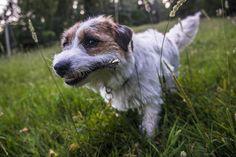 milli can fetch! Corgi, Cute, Animals, Corgis, Animales, Animaux, Kawaii, Animal, Animais