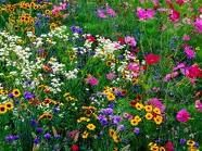 Wildflowers!!!