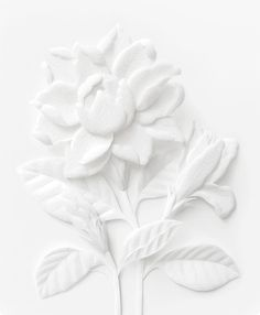 "joartflores: ""As if frozen in time, these white thai flowers are forever blossomed in this paper sculpture by Wirin Chaowana Kirigami, Elisabeth I, White Paper Flowers, Paper Art, Paper Crafts, Quilling Designs, White Aesthetic, Shades Of White, Paper Cutting"