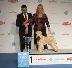 Helsinki Winner 2013. FCI 3: CAmeron Rockferry, Irish Soft Coated Wheaten Terrier