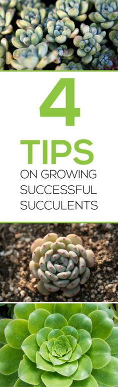 Do you have succulents?  Want them to last?  Read 4 Tips on Growing Successful Succulents