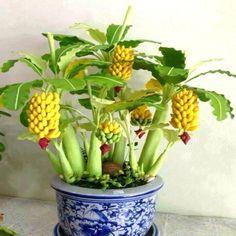 50粒子鉢植えバナナメロン種子美しいガーデン盆栽植物ゴールデン細長いカボチャオリジナルパッケージ種子野菜