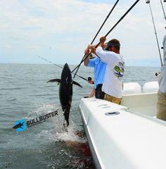 Fishing Report: The Yellowfin Tuna Bite Has Been Going Off In Venice Louisiana! Salt Water Fish, Salt And Water, Blackfin Tuna, Tuna Fishing, Destin Fishing, Yellowfin Tuna, Fishing Report, Tuna Recipes, Fishing Charters