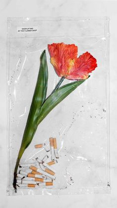"petalsdrop - masakoh: ""shoplifting at the flower shop "" - Still Life Photography, Art Photography, Trash Art, Grafik Design, Art Design, Oeuvre D'art, Art Direction, Art Inspo, Illustration"