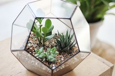 Comes with a kit including pebbles and activated charcoal. Instructions will be included. Plants and soil not included. Contact us if you would like to collect a planted version.