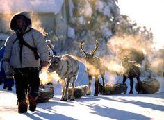 Traditional reindeer caravan in Jokkmokk