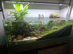 Do you have any fun home aquarium ideas? Turtle Aquarium, Tropical Fish Aquarium, Nano Aquarium, Aquarium Fish Tank, Planted Aquarium, Frog Habitat, Turtle Habitat, Reptile Habitat, Reptile Room