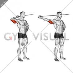 Guide for exercise of fitness and bodybuilding . Target muscles are marked in red. Initial and final steps. Workout Routine For Men, Gym Workout For Beginners, Gym Workout Tips, Cycling Workout, Workout Videos, Cycling Tips, Road Cycling, Exercise Workouts, Exercise Equipment