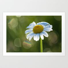 "Art Print / MINI (10"" x 7"") Originalaufnahme (originalaufnahme) Daisy after rain at backlight by Originalaufnahme $18.00  #posters #artworks #graphic design #texture #inspiration #artists #stretched canvas #illustrations #room #products #pretty #colour #inspiration #Wall Art #Home Decor #Throw Pillows #Cards #Mugs #Shower Curtains #Wall Tapestries#Duvet Covers #Rugs #Wall Clocks #Art Prints #Framed Art Prints #Canvas Prints #Editions #Wall Tapestries"