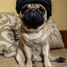 What's your favorite tale from 1001 nights?  #mauricethepug #storytime #bedstory #1001nights #aladin #genie #genieinabottle #story #oriental #turban #pug #mops #puppy #dog