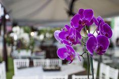 orquideas by candelero thai