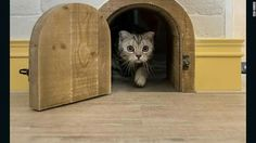 """These sweet """"cat flats"""" are springing up across Asia. Tiny arched doorways connecting rooms, shelves that serve as climbing frames and scratching surfaces doubling as decorative features are the norm. How amazing are these? Diy Interior Cat Door, Cat Flats, Cat Bedroom, Cat Hacks, Pet Door, Feral Cats, Cat Wall, Cat Furniture, Cat Life"""