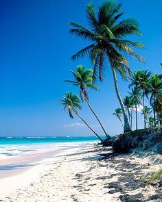 #beach #beauty #summer #sand #ocean #palmtrees