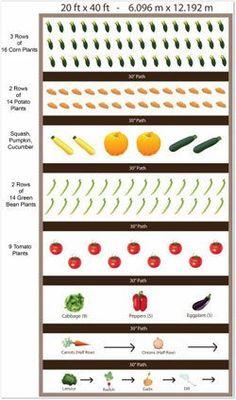 Raised Vegetable Garden, Above Ground Vegetable Garden, Raised Bed Garden Plans | WealthShare Society