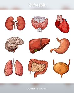 Human Body Organs, Human Body Parts, Cartoon Brain, Arte Com Grey's Anatomy, Medical Photography, Medicine Notes, Human Anatomy Art, Medical Anatomy, Medical Art